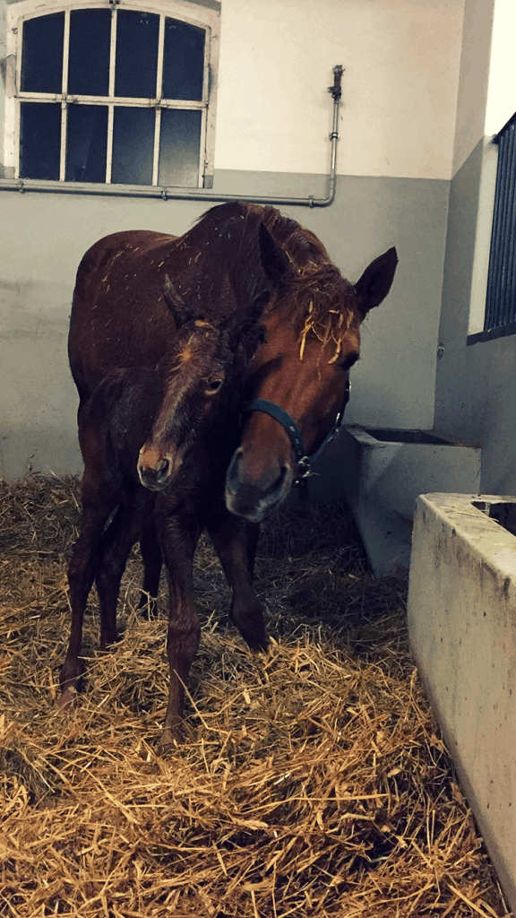 Mother and foal - Back in the saddle