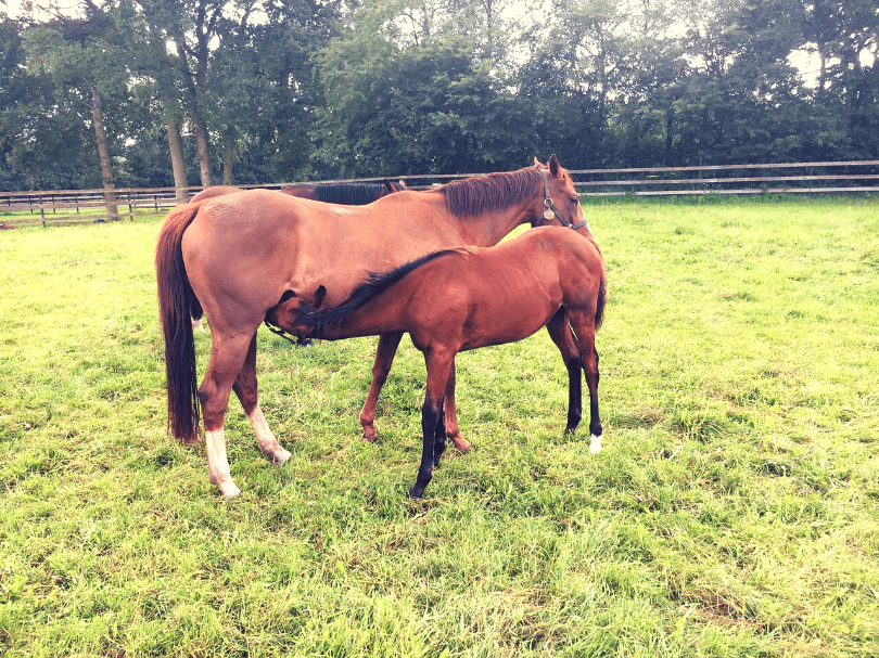Mother feeding foal and expressing horse love